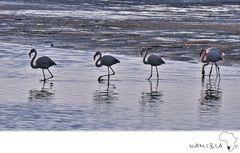 Flamingos in line