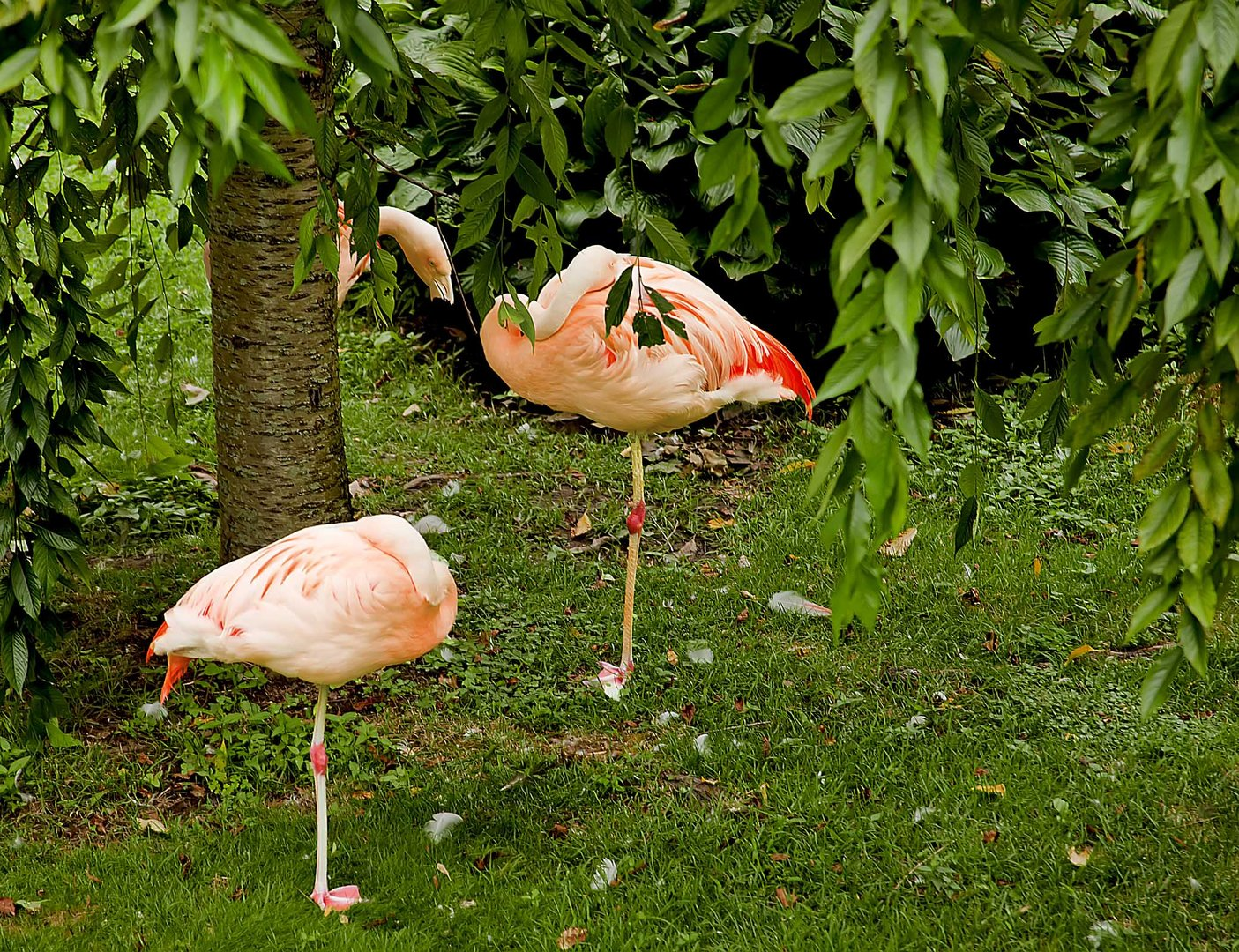 Flamingos in the pink