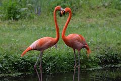 Flamingos mit HERZ :-)