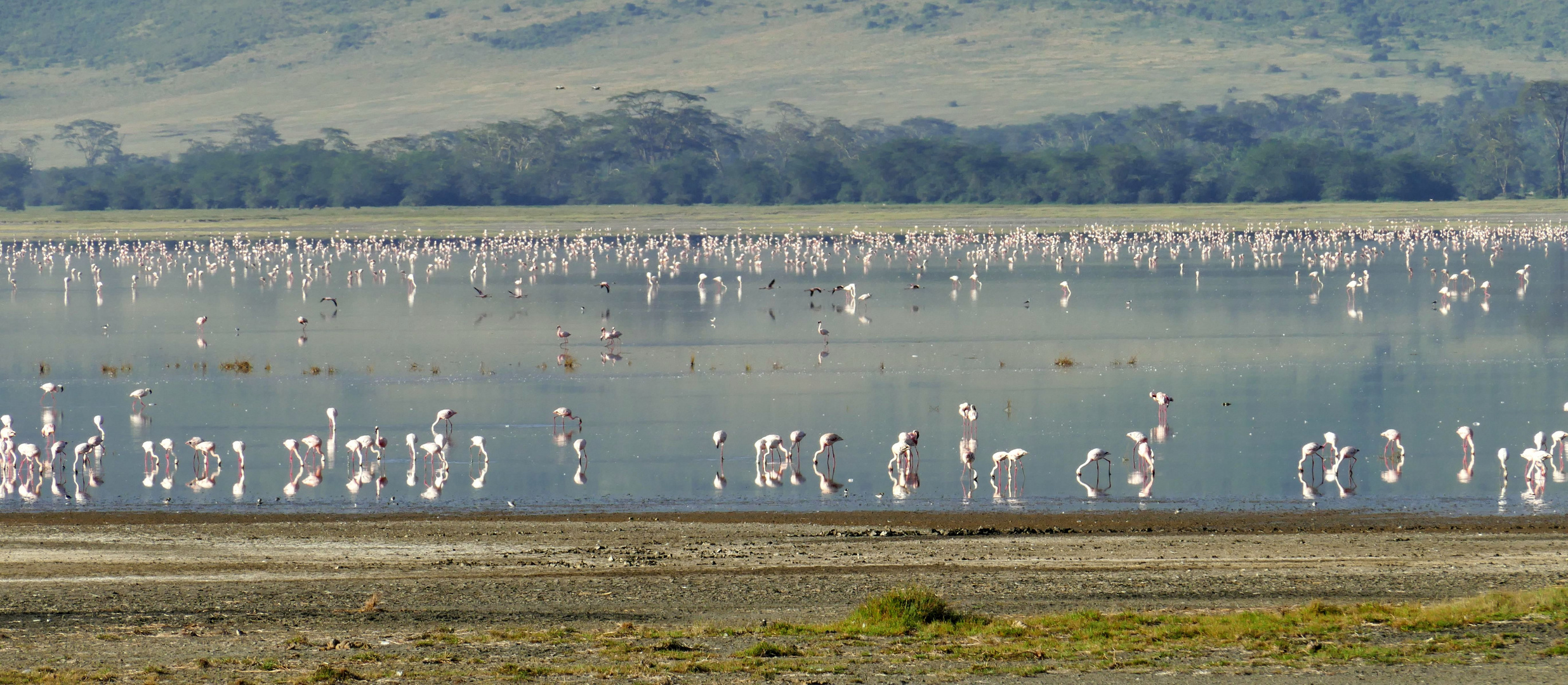 ...Flamingos so weit das Auge reicht...