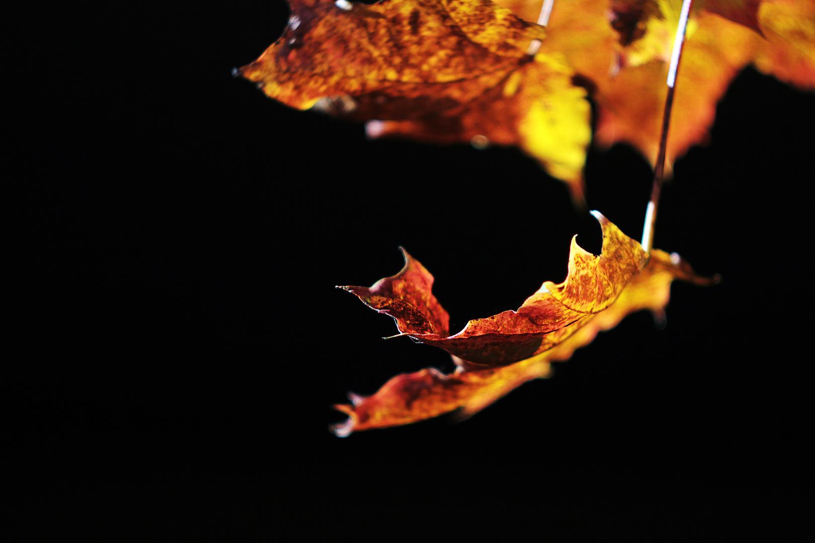 Flammen des Herbstes.