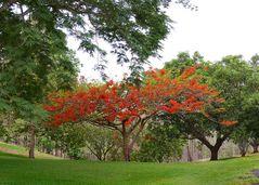 Flammenbaum