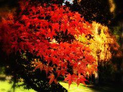 Flammende Blätter...