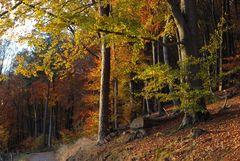 Flammender Herbst