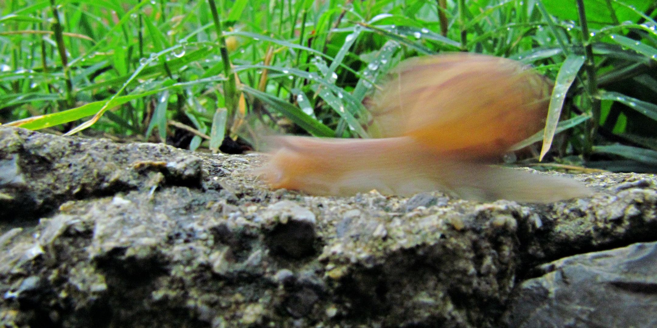 ---Flash---