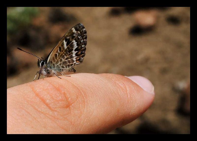 Flattermann @ my Finger