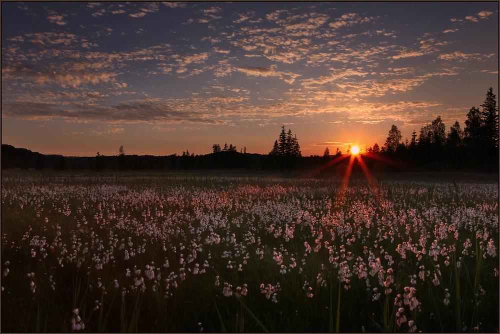 ~ Flauschiger Sonnenuntergang ~