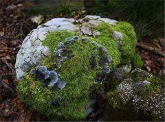 Flechte und Moos teilen sich einen Felsen.