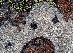 Flechten beherrschen die Kunst, unsere Herzen zu erfreuen! - L'art des lichens!