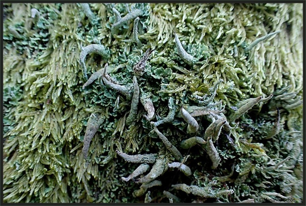 Flechten-Moos-Wirrwarr Foto & Bild   pflanzen, pilze & flechten ...