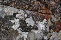 Flechten-Vielfalt auf Kalkstein