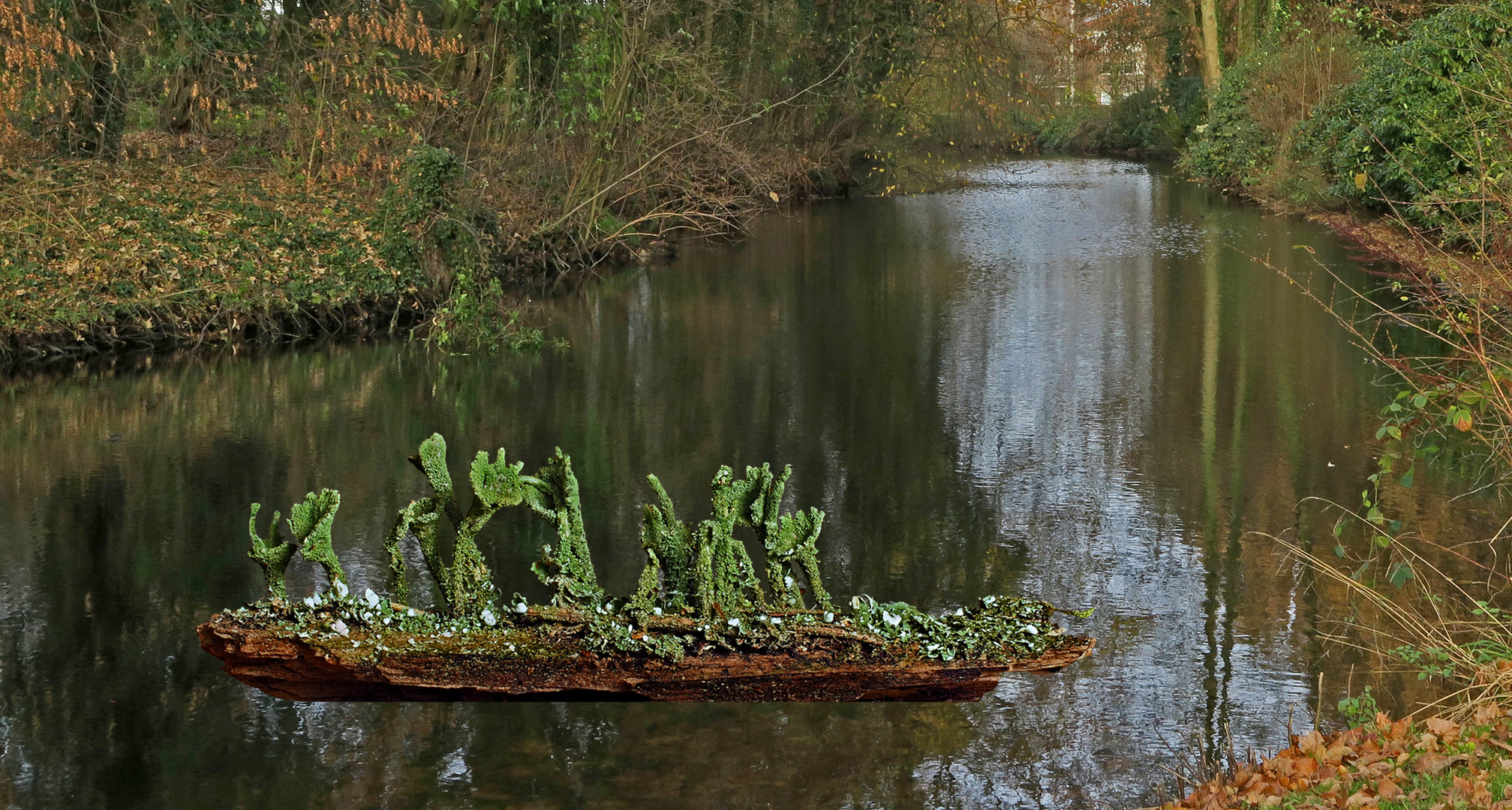 Flechtenboot Cladonia pyxidata