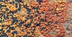 Flechtenkunst Ton in Ton ... - Les lichens et les rochers étaient rouges.