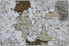 Flechtenmix auf altem Grabstein