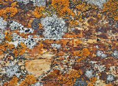 Flechtenvielfalt auf einem gelb-roten Felsen. - Une oeuvre d'art de Mère Nature!