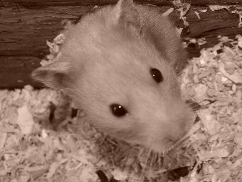 Flecky