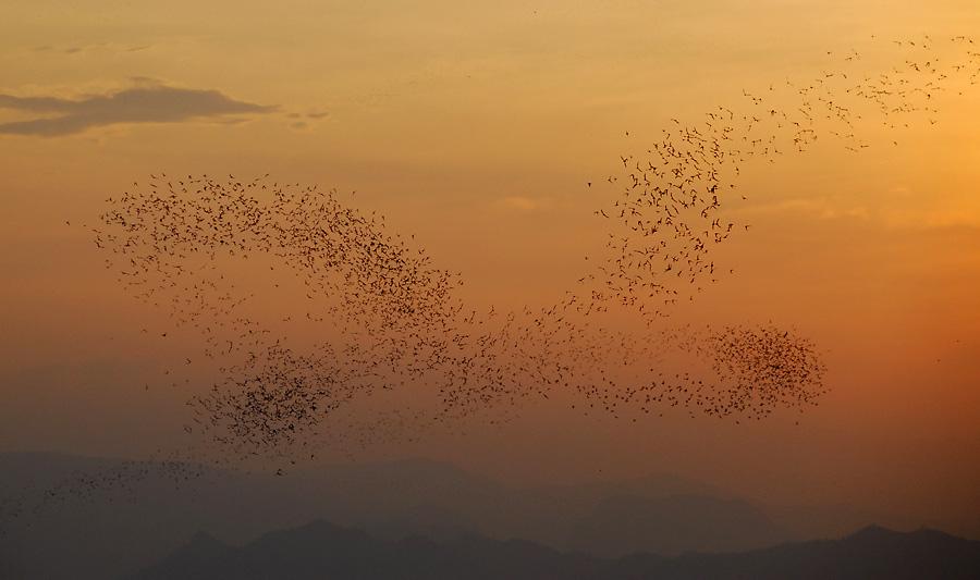 Fledermaushimmel