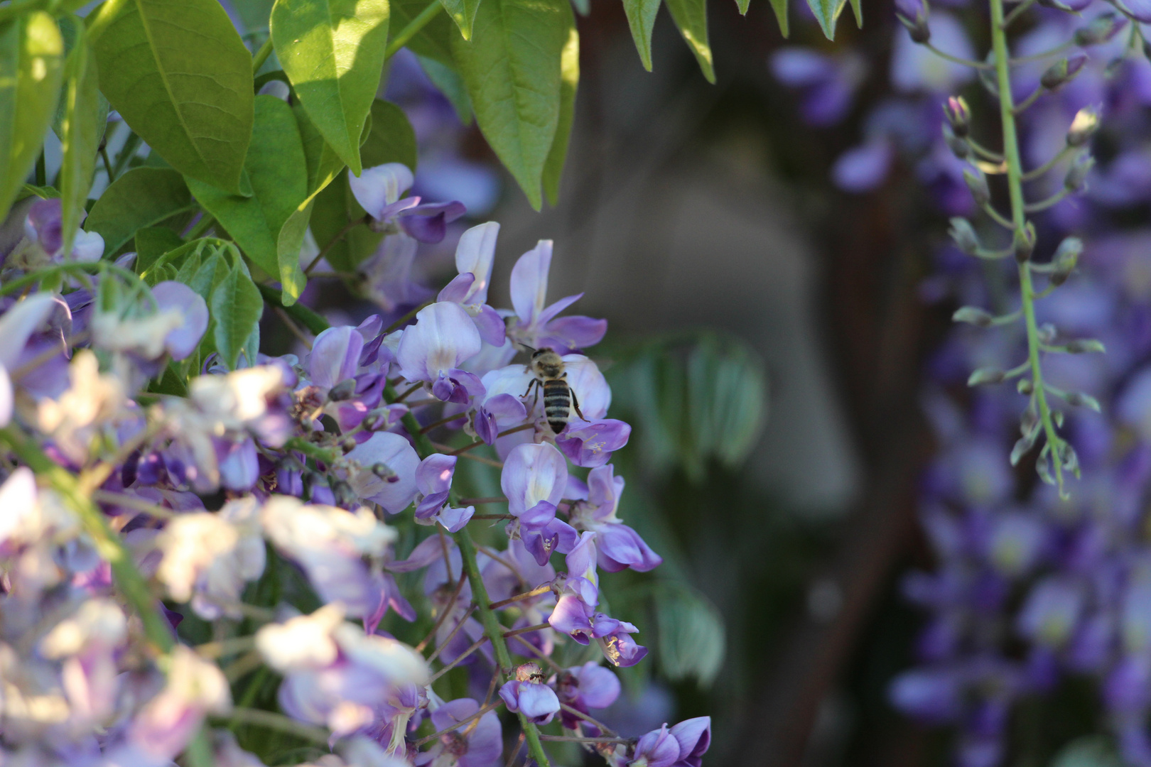 Fleisiges Bienchen