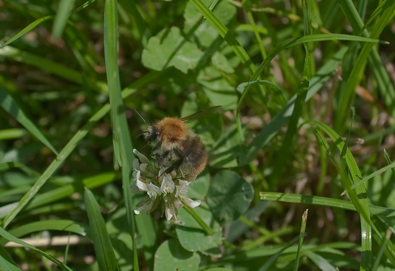 Fleißig für den Honig