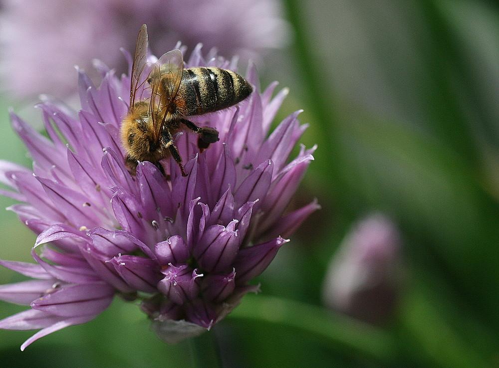Fleißig Wie Eine Biene