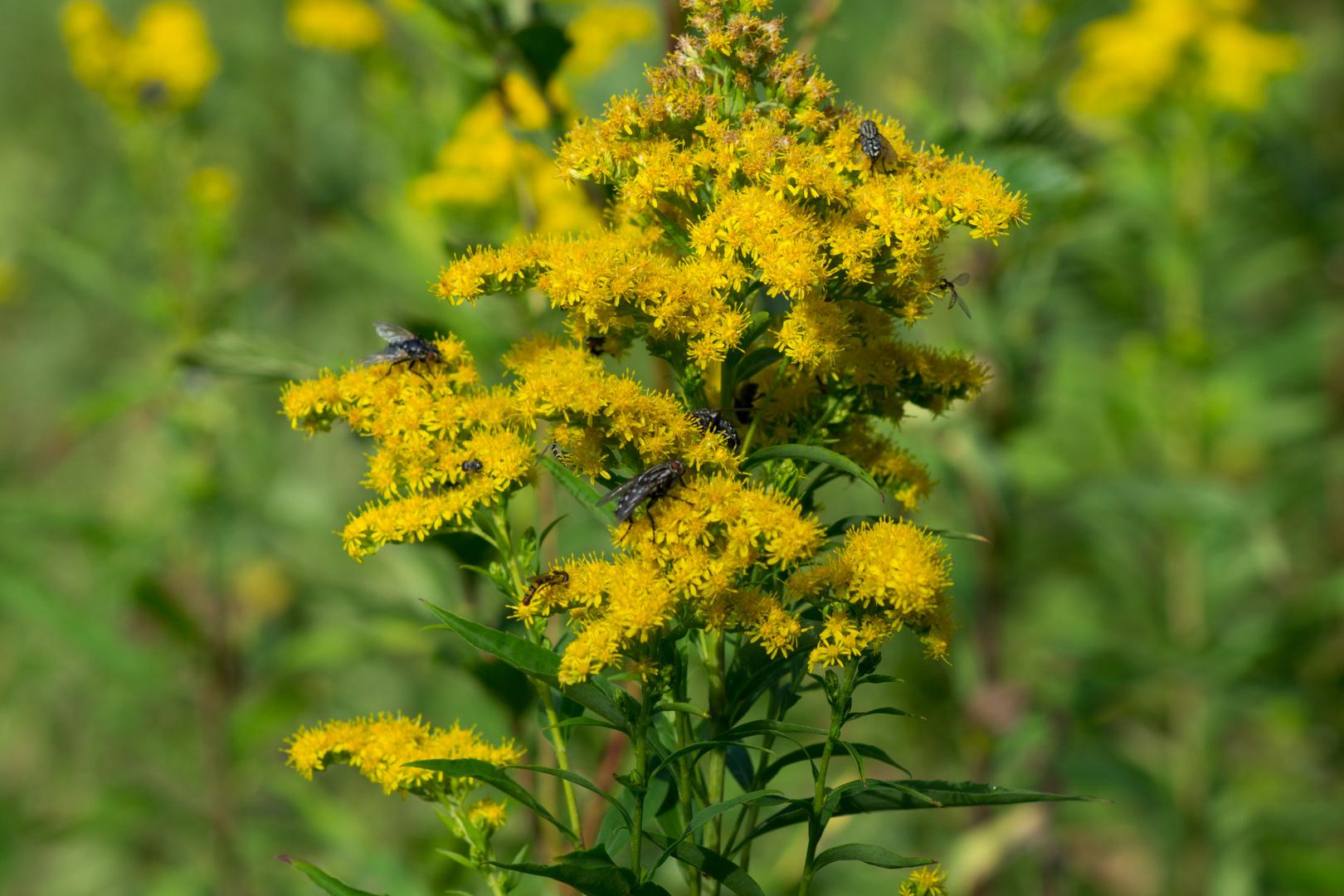 fleißige Bienchen Äh... Fliegchen