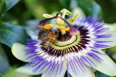 ...fleißige Bienchen