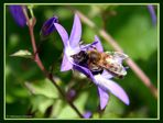 Fleißige Biene I