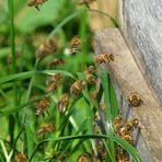 Fleißige Bienen # 1