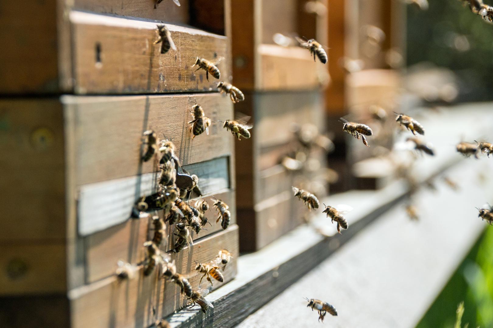 - Fleißige Bienen -