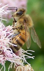 Fleißige Insekten 1