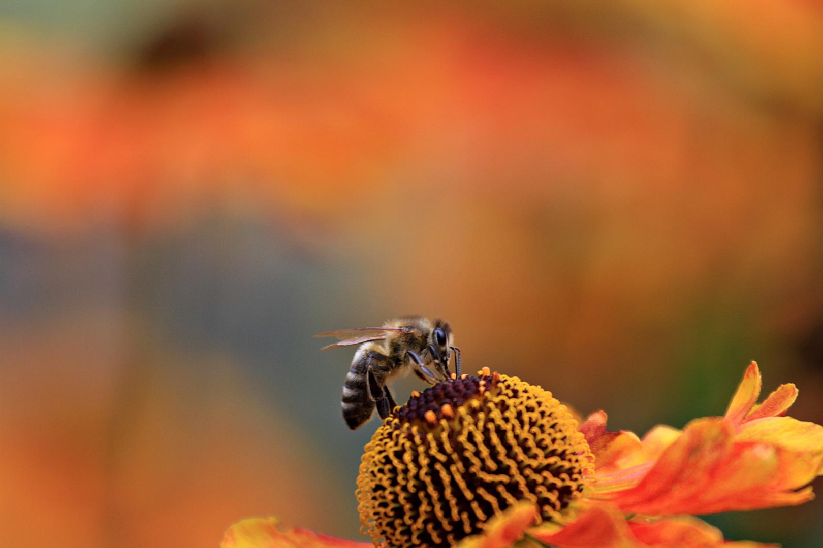 Fleißiger Helfer im Blumenbeet