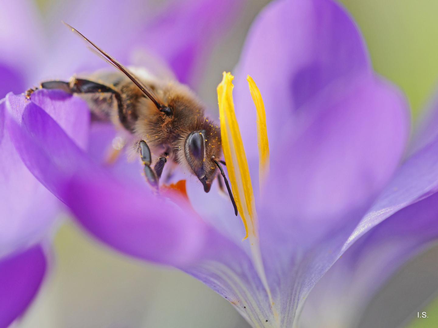 Fleißiges Bienchen!