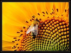 """"""" Fleißiges Bienchen """""""