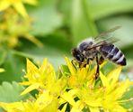 Fleißiges Bienlein