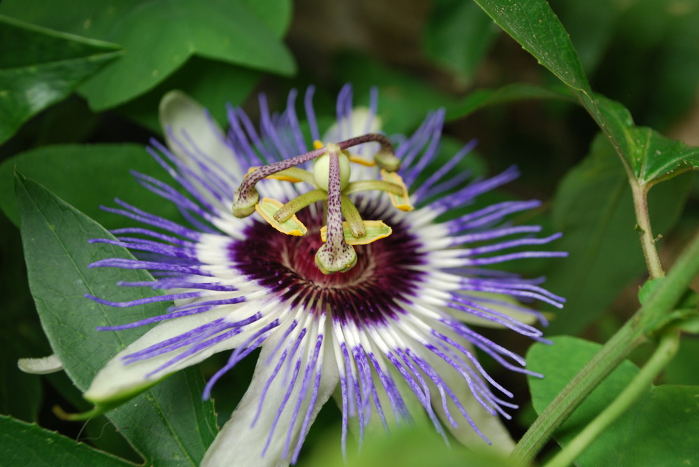fleur bizarre