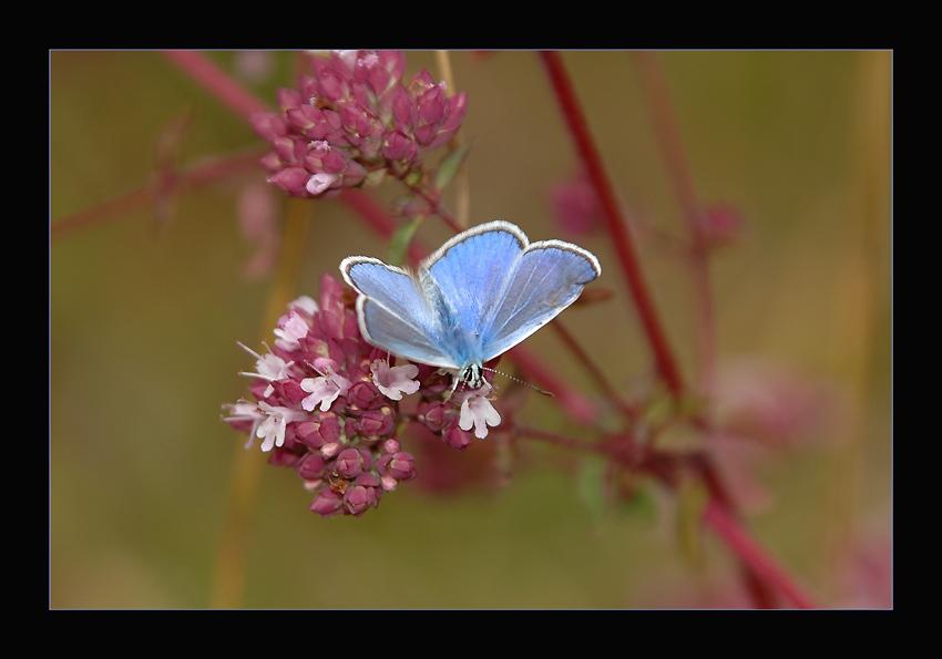 """""""Fleur bleue"""""""