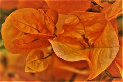 fleur d été .....