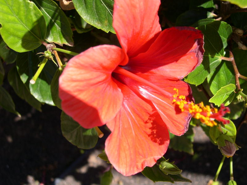 Fleur d'ailleurs