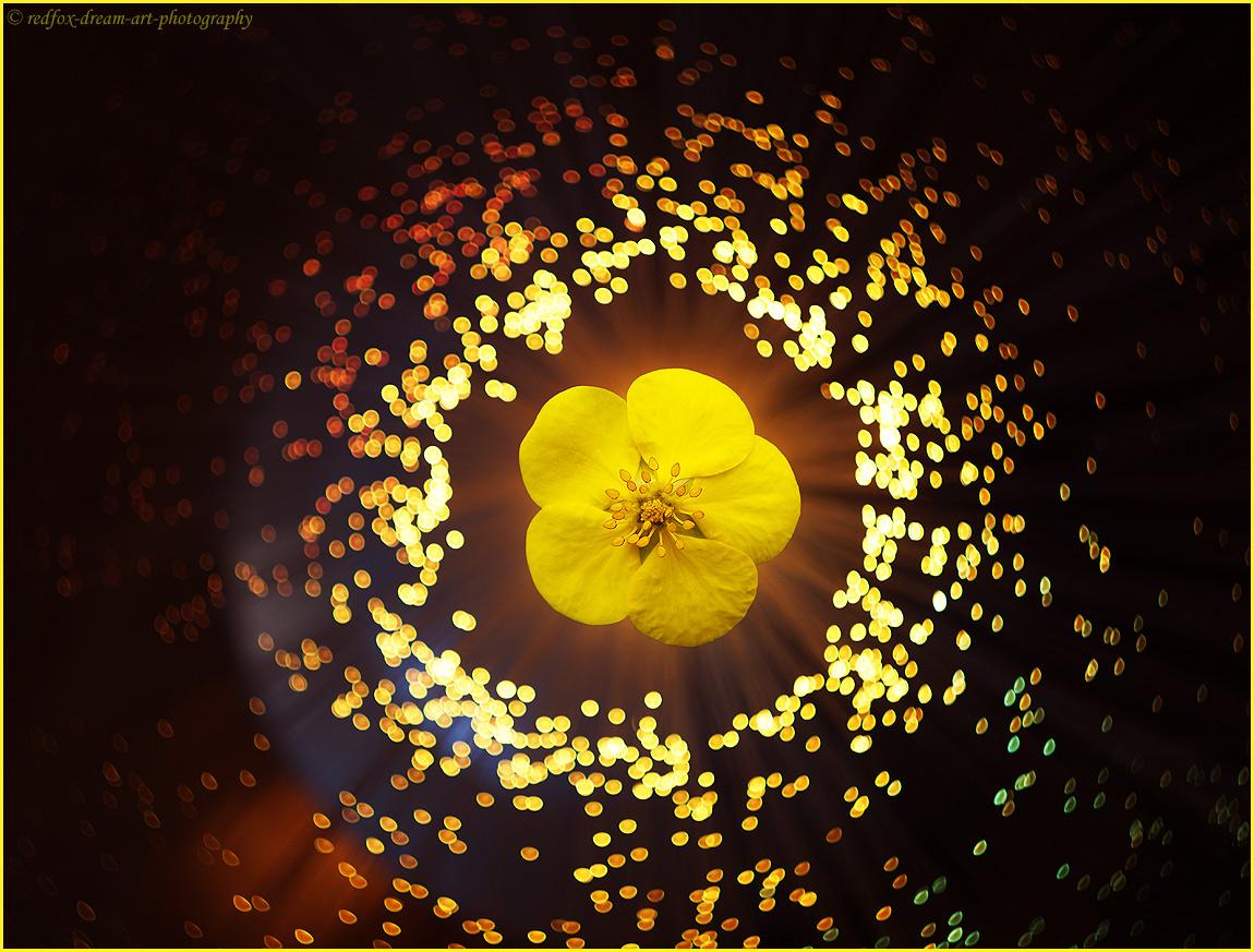 fleur dans l'espace