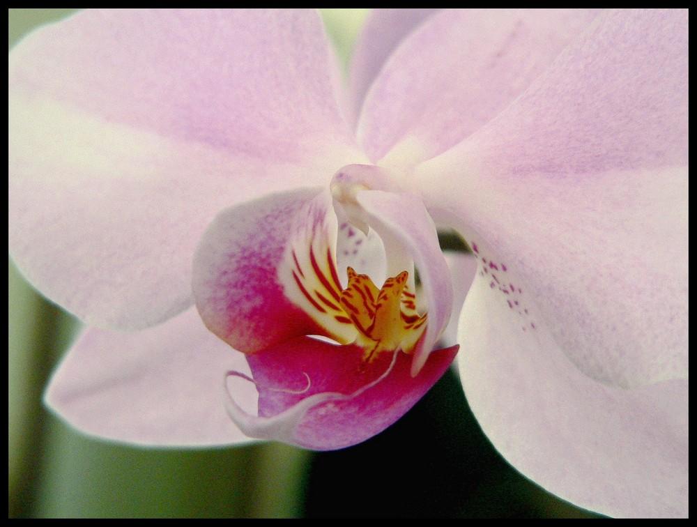 fleur de maman