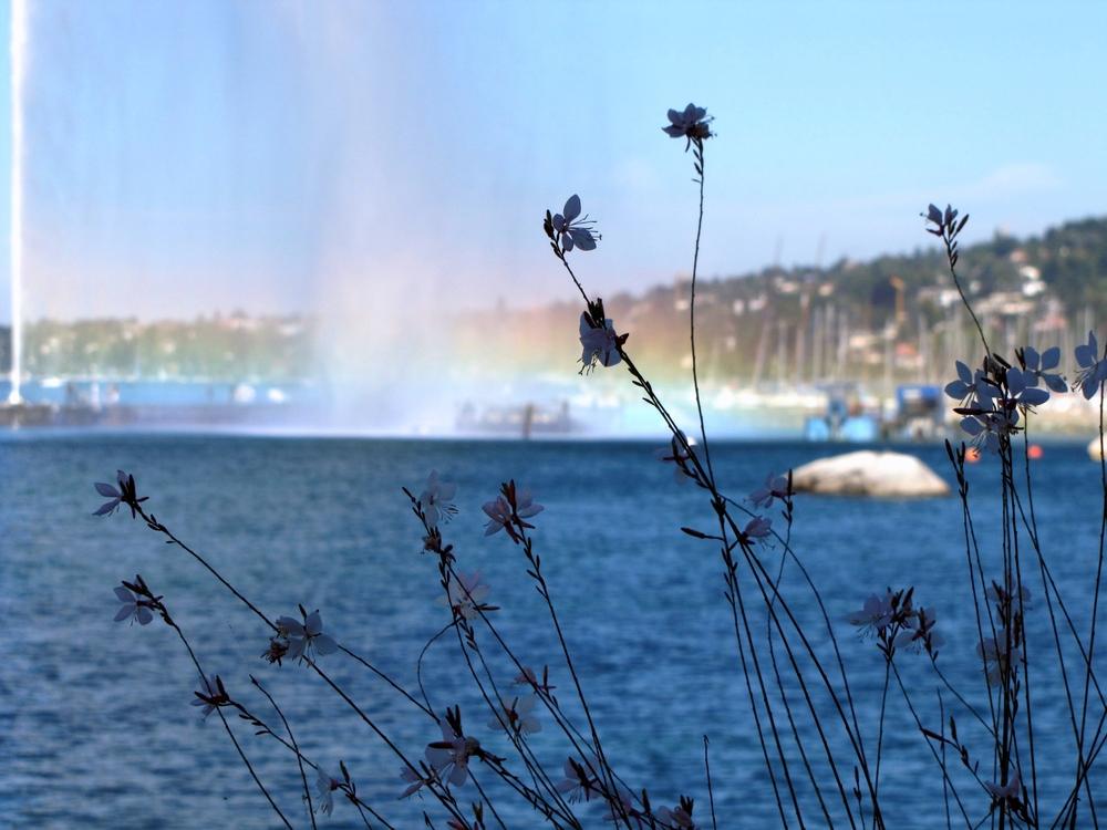Fleur & eaux