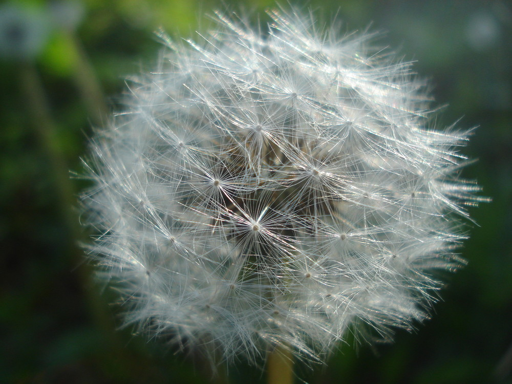 fleur éphémere