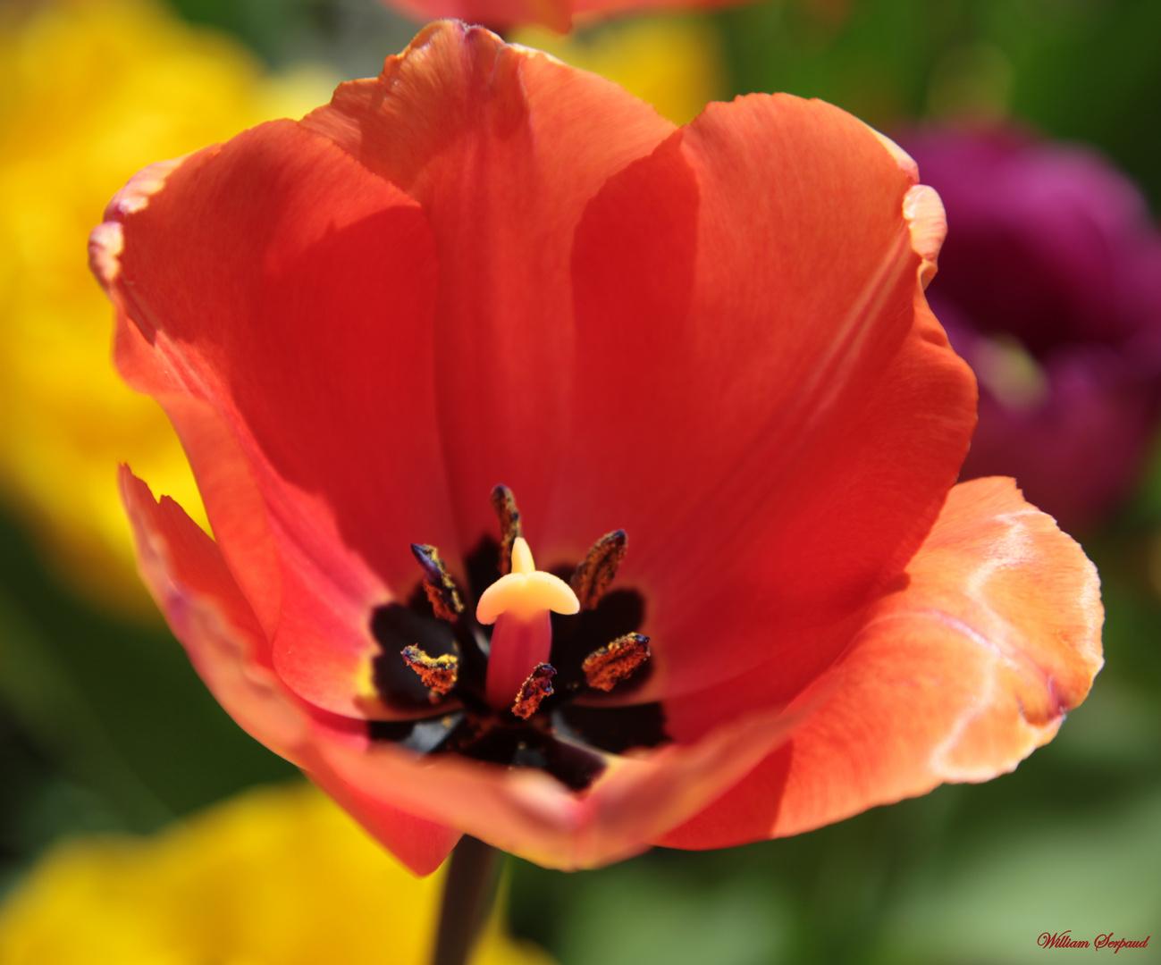 Fleur et son pollen