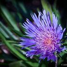'Fleur Fantastique'
