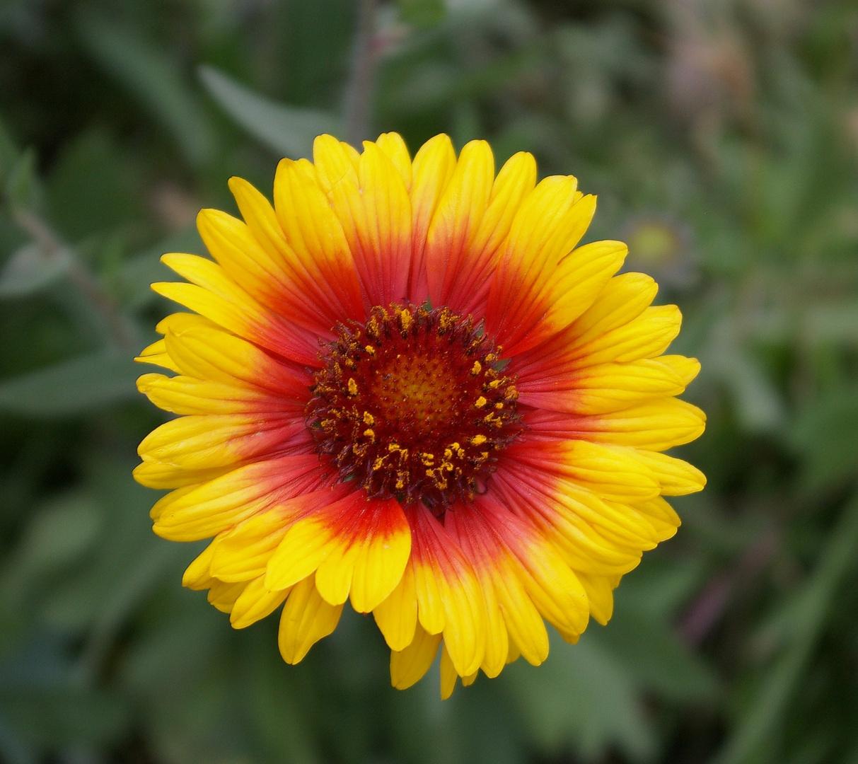 fleur g124