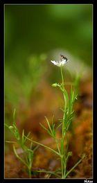 fleur O_o