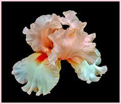 fleur ou papillon?