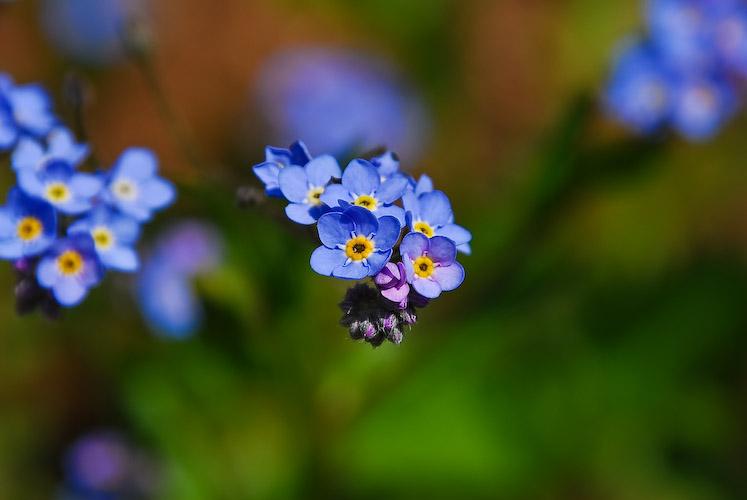 Fleur sauvage...