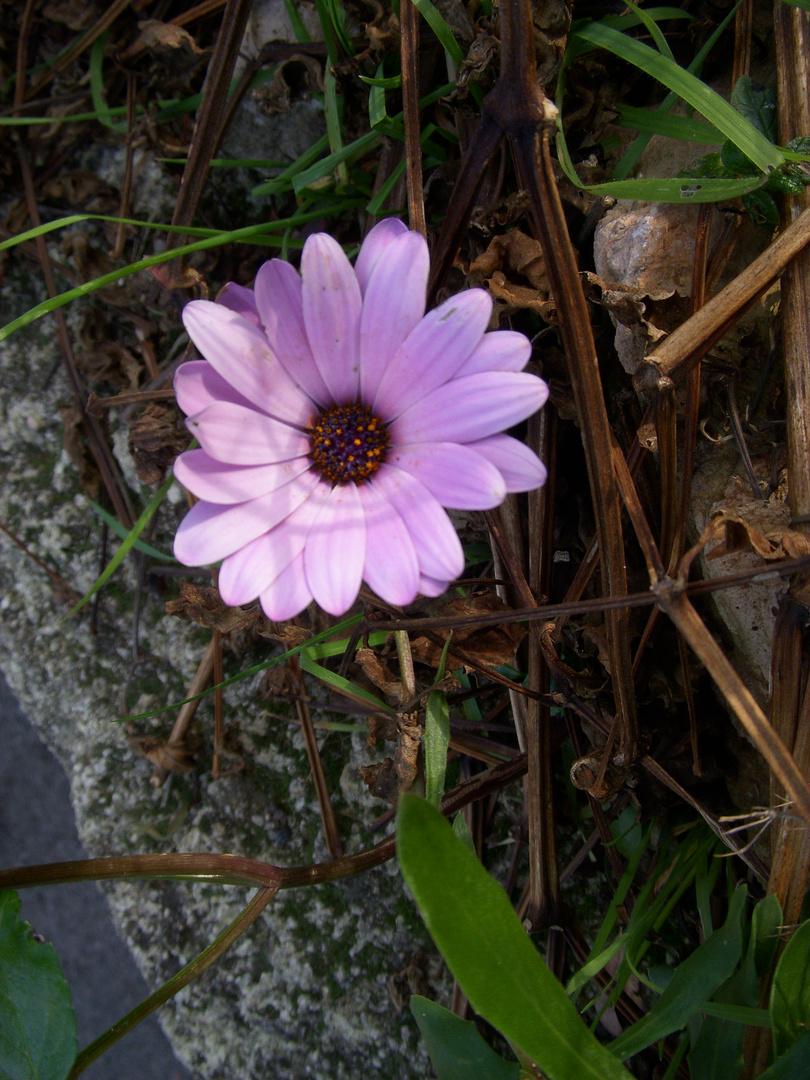 Fleur sauvage donc je ne connais pas le nom !!