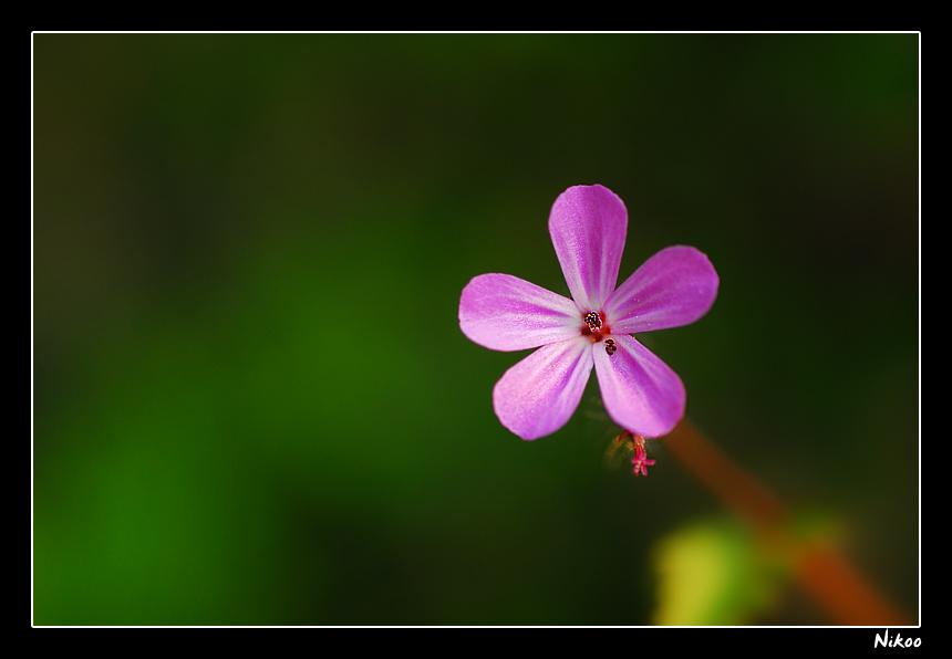 Fleur violette photo et image macro nature nature - Image fleur violette ...